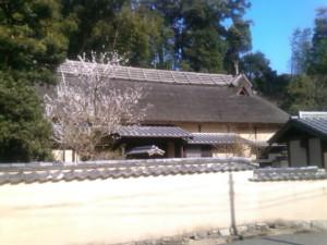 旧田代邸の梅の木