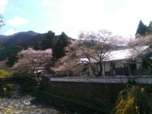 秋月、桜、舞う