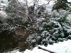 雪降る秋月